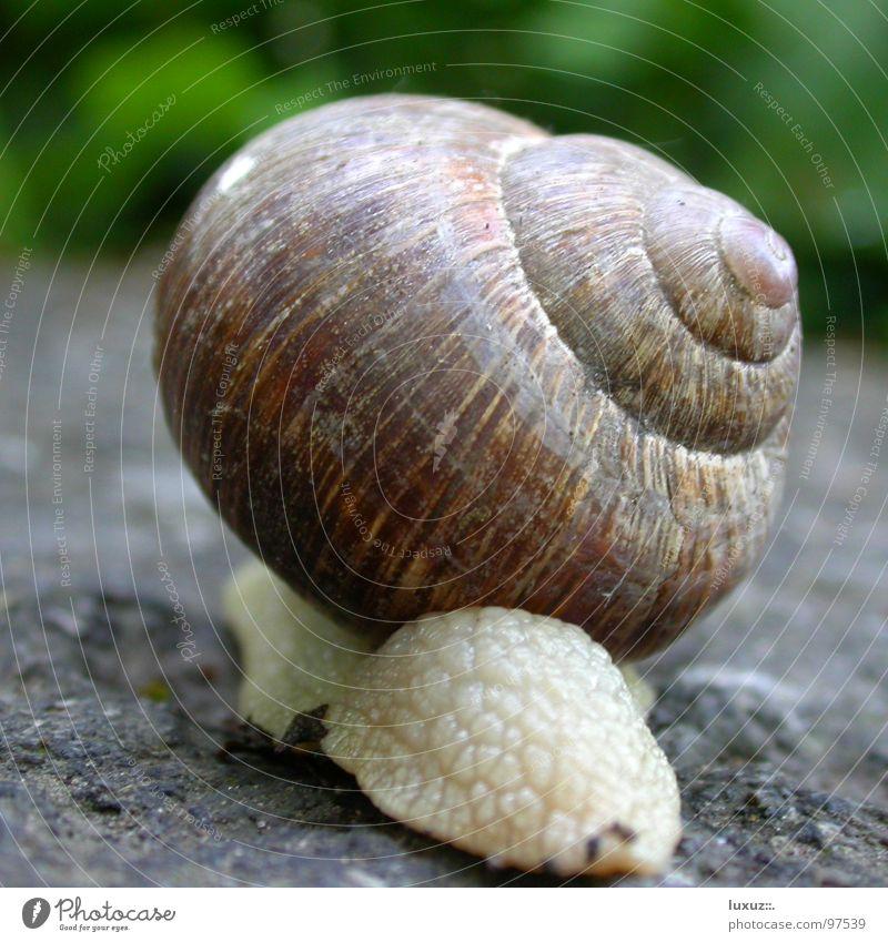 Wohn mobil Wohnmobil Mobilität langsam wandern Haus Schneckenhaus Hinterteil Heck Säugetier Verkehr Ferien & Urlaub & Reisen rückwärts back snail slow jurney