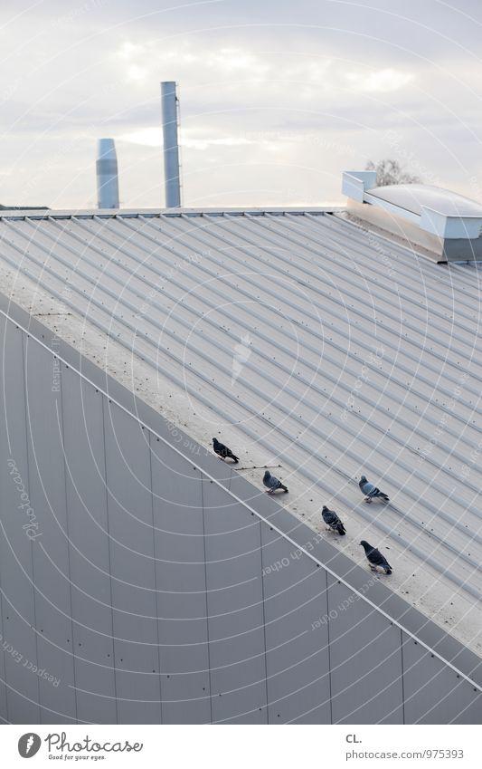 5 tauben Himmel Wolken Industrieanlage Fabrik Gebäude Dach Schornstein Tier Taube Tiergruppe Umwelt Farbfoto Gedeckte Farben Außenaufnahme Menschenleer Tag