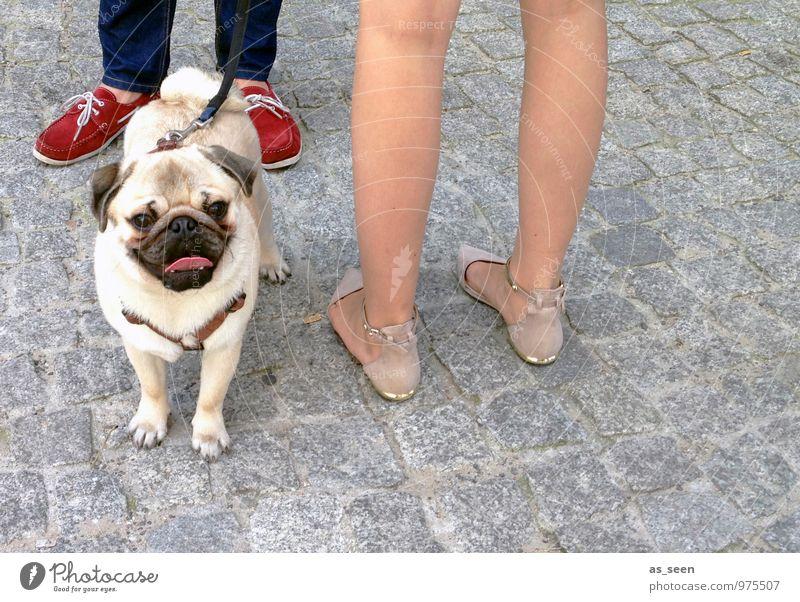 Ansichten eines Mopses Mensch maskulin feminin Fuß 2 Umwelt Straße Pflastersteine Schuhe Turnschuh Tier Haustier Hund 1 Stein Blick stehen authentisch Coolness