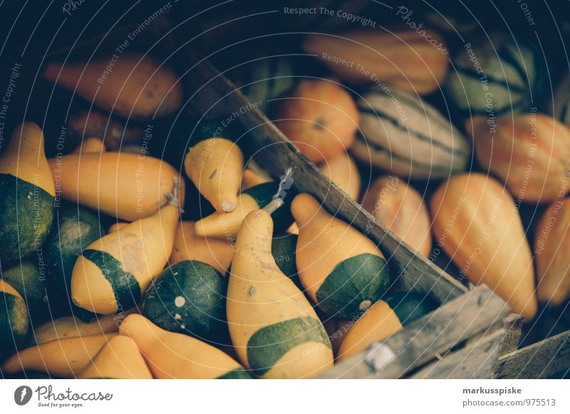 zier kürbis grün weiß gelb Gesundheit Garten Feste & Feiern Lebensmittel Wachstum Zufriedenheit Dekoration & Verzierung verrückt Fröhlichkeit kaufen harmonisch exotisch herbstlich