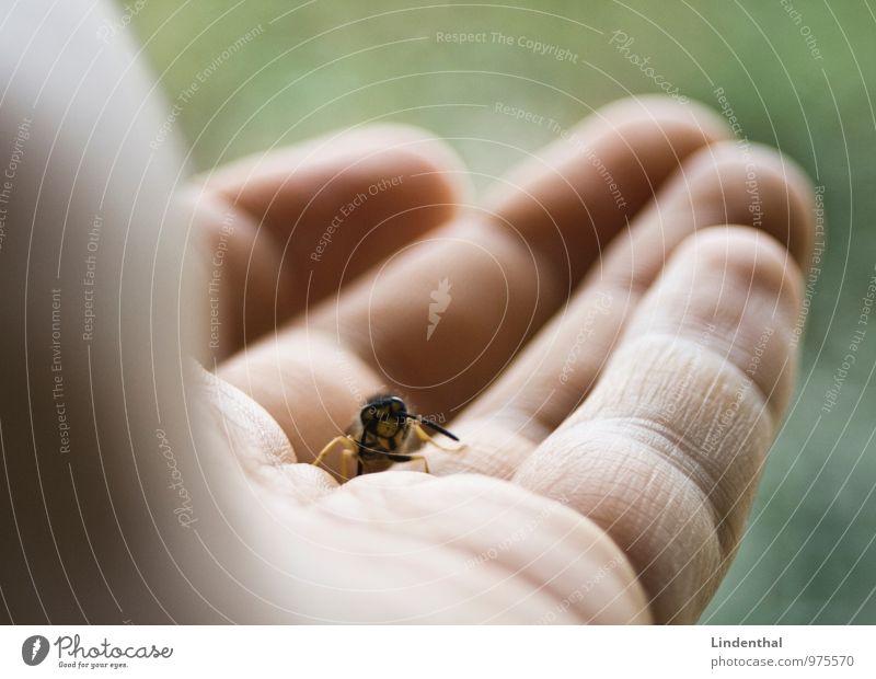 Wespe auf Hand grün Tier fliegen Finger Pause Biene krabbeln Wespen