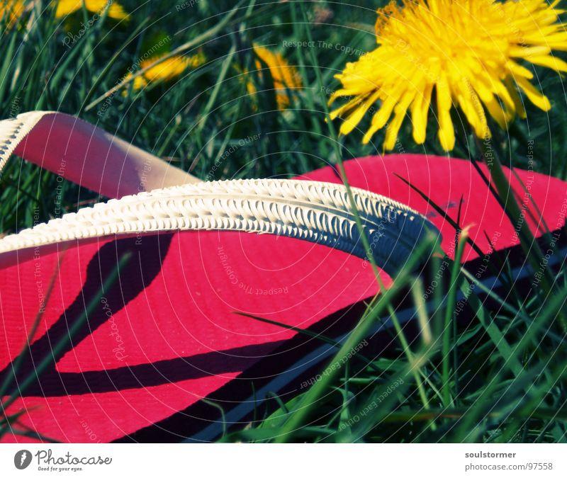 einfach mal rumgammeln... Flipflops Schuhe Sandale gelb grün rot Löwenzahn Frühling Wiese Gras Erholung Pause ruhen Blume Pflanze gehen stehen unten ruhig