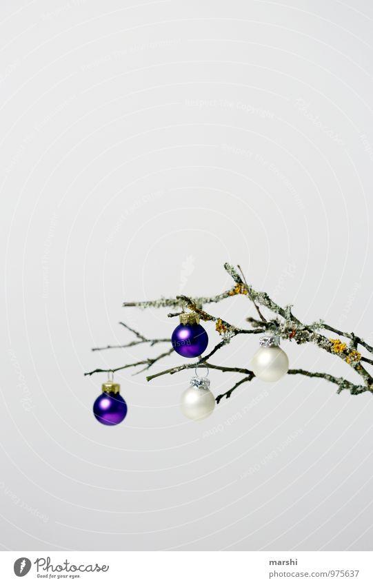 bis Weihnachten abhängen Zeichen Stimmung Weihnachten & Advent Ast herbstlich Dekoration & Verzierung Christbaumkugel Weihnachtsbaum Freisteller Farbfoto