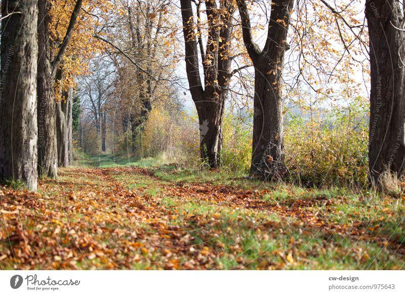 Herbstzeit Natur Ferien & Urlaub & Reisen Pflanze grün Landschaft Erholung ruhig Wald gelb Umwelt Wiese Garten Freiheit braun Ausflug