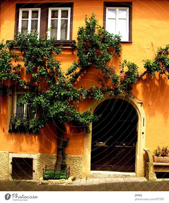 Baumhaus Haus Rothenburg ob der Tauber Wachstum Fenster Eingang Berghang Kopfsteinpflaster grün Kellerfenster Sightseeing Tourist zusammenwachsen Zusammensein