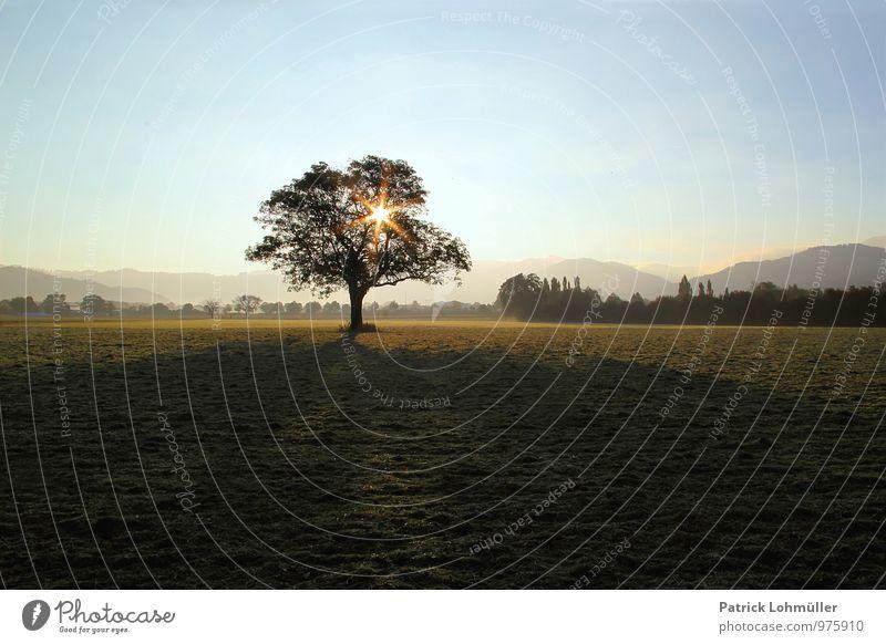 Herbstmorgen Umwelt Natur Landschaft Erde Wolkenloser Himmel Sonne Sonnenlicht Schönes Wetter Baum Wiese Berge u. Gebirge Freiburg im Breisgau Deutschland