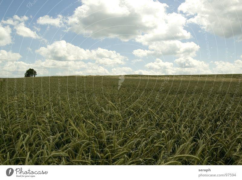 Felder Wiese Roggen Weizen Gerste Horizont Umweltschutz Halm Ähren ökologisch Kornfeld ländlich Landwirtschaft Getreide Natur Landschaft Ackerbau Pflanze