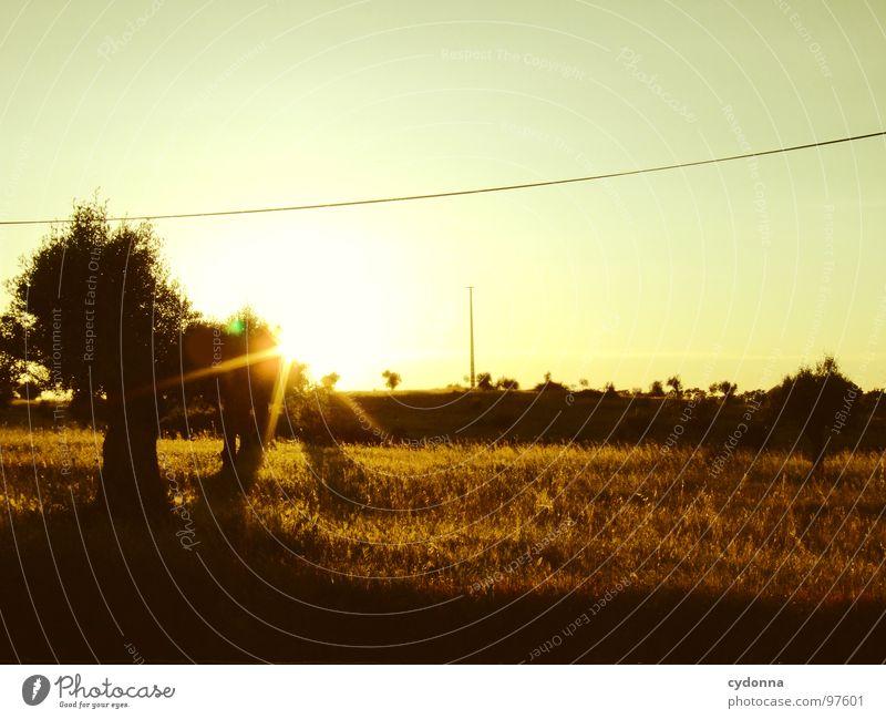 Ein Abend im Olivenhain Himmel Natur grün schön Ferien & Urlaub & Reisen Pflanze Sonne Sommer Einsamkeit Landschaft Leben Wiese Ausflug außergewöhnlich Tourismus Wandel & Veränderung