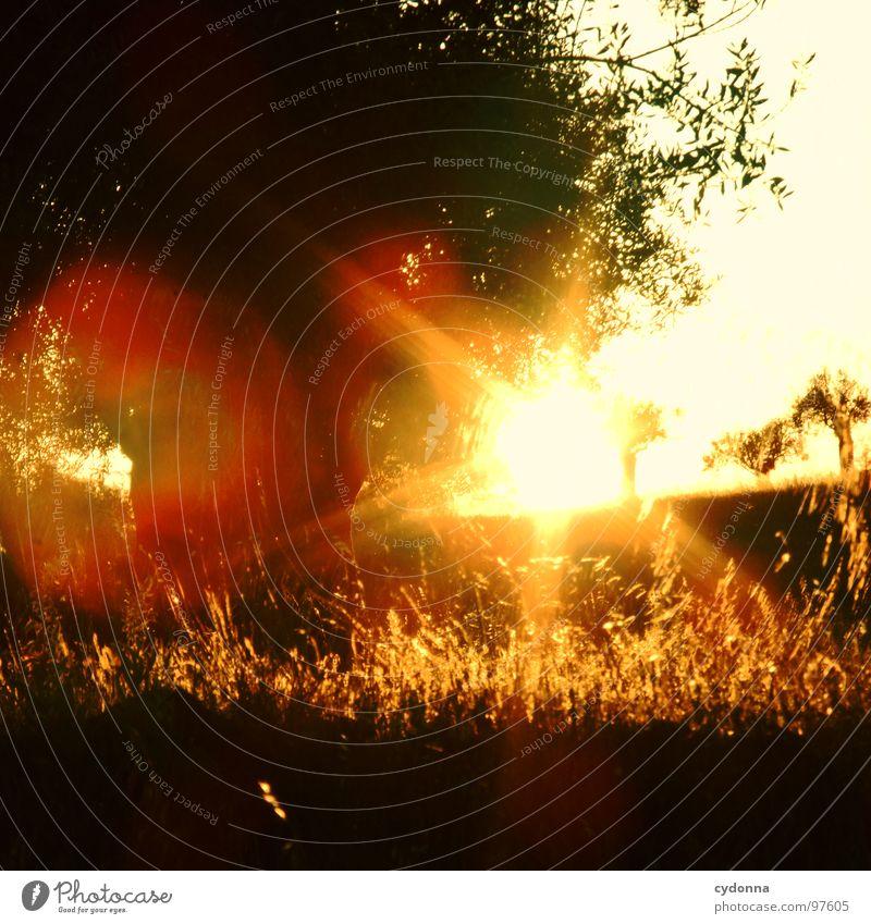 Ein Abend im Olivenhain II Himmel Natur grün schön Ferien & Urlaub & Reisen Pflanze Sonne Sommer Einsamkeit Landschaft Leben Wiese Wärme Ausflug außergewöhnlich Tourismus