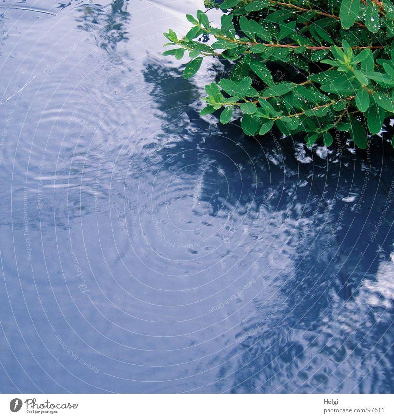 es regnet...schon wieder... Wasser grün blau Pflanze Sommer Blatt Garten Park Regen Wassertropfen nass Kreis fallen Stengel Teile u. Stücke Gewitter