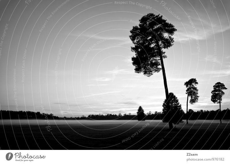 Ruhe Umwelt Natur Landschaft Himmel Herbst Nebel Baum Sträucher Wiese dunkel nachhaltig natürlich ruhig Einsamkeit Erholung Idylle kalt Scham Stimmung