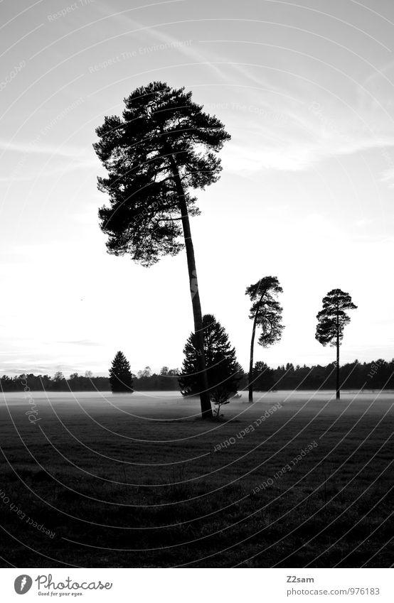 Herbstspaziergang Natur Baum Erholung Einsamkeit Landschaft ruhig Wolken Ferne dunkel kalt Umwelt Wiese natürlich Stimmung Idylle