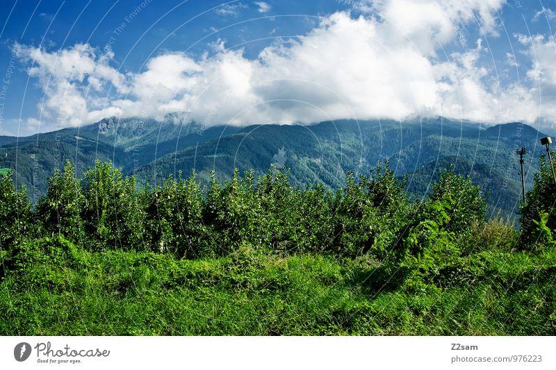 Schön wars Umwelt Natur Landschaft Himmel Wolken Sommer Schönes Wetter Sträucher Alpen Berge u. Gebirge Gipfel nachhaltig natürlich blau grün Farbe Idylle Apfel