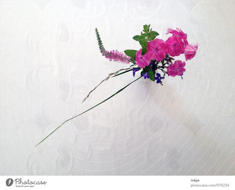 Blümchen Frühling Sommer Blume Gras Blüte Blumenstrauß Dekoration & Verzierung Tischwäsche damast Blühend schön klein natürlich unten grün rosa Gefühle Farbe