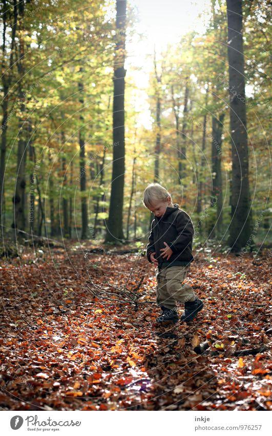 Waldspaziergang Sinnesorgane ruhig Freizeit & Hobby Ausflug wandern Spaziergang Natur Sonne Sonnenlicht Herbst Schönes Wetter Baum Laubwald Blatt Herbstlaub