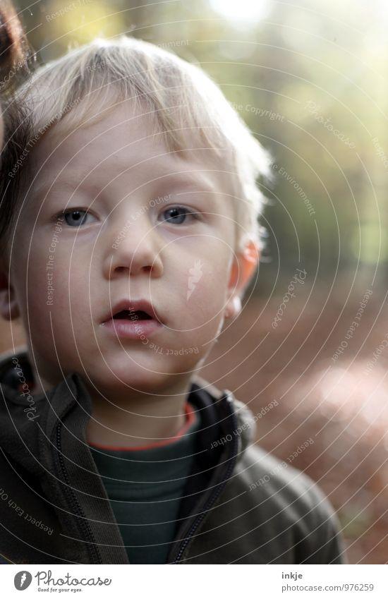 * Mensch Natur Wald Gesicht Leben Herbst Gefühle Junge Stimmung Park Freizeit & Hobby blond Kindheit Ausflug Schönes Wetter Neugier