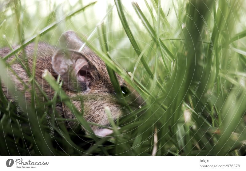Mäuschen 2 Natur grün Sommer Tier Herbst Wiese Gras Frühling klein braun Wildtier authentisch niedlich Schutz nah verstecken
