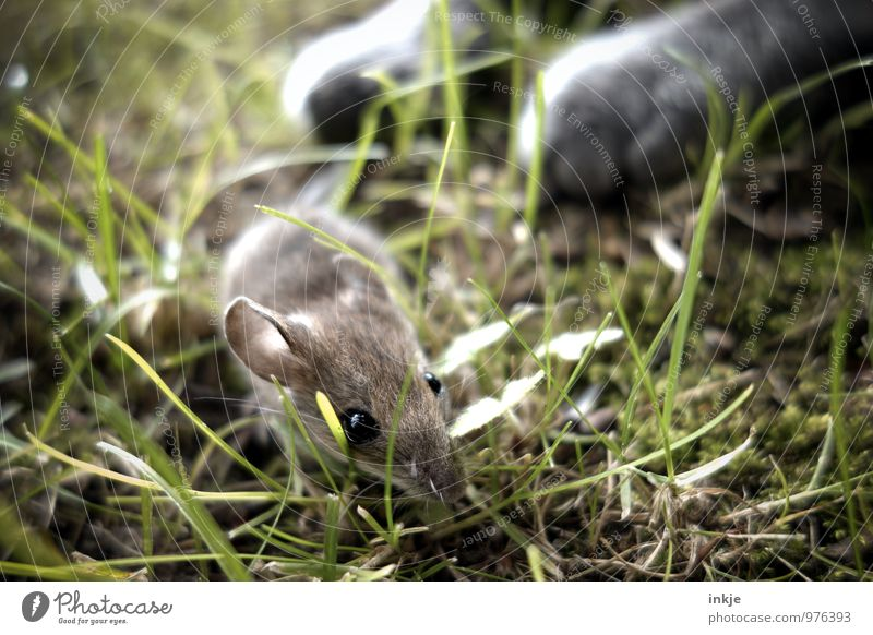 curiosity... Katze Sommer Tier Frühling Wiese Gras Garten Wildtier laufen gefährlich bedrohlich Hoffnung Todesangst Haustier Jagd Tiergesicht