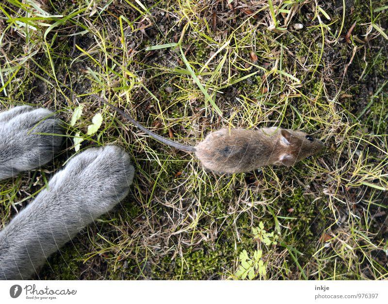 ...kills. Katze Sommer Tier Herbst Gefühle Gras Frühling Garten Angst Wildtier gefährlich bedrohlich Hoffnung Todesangst Ende rennen