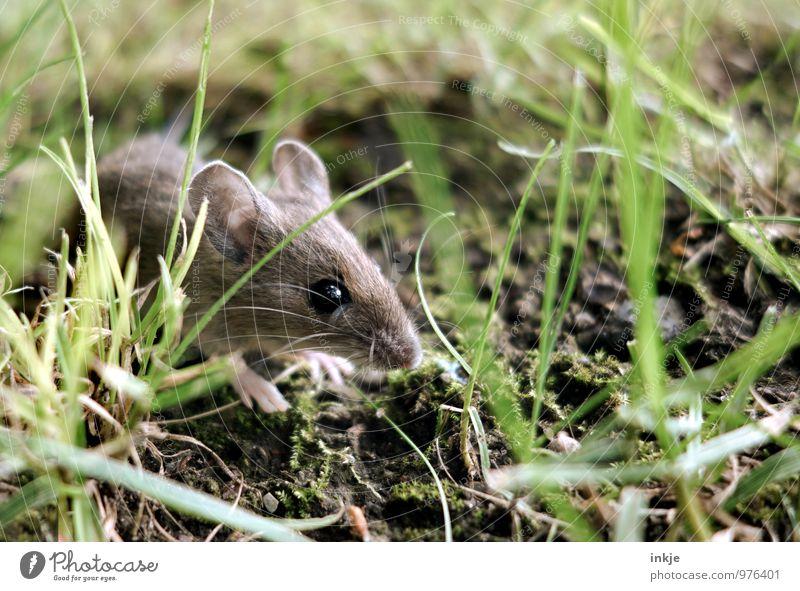 Mäuschen 1 Natur grün Sommer Tier Wald Herbst Gefühle Wiese Gras natürlich Frühling klein braun Stimmung Wildtier niedlich