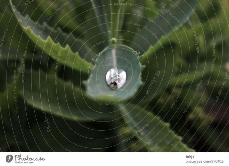 Ertrinken im Blumenbeet Wasser Wassertropfen Frühling Sommer Herbst Regen Pflanze Blatt Wildtier Totes Tier Spinne 1 außergewöhnlich bedrohlich nass grün