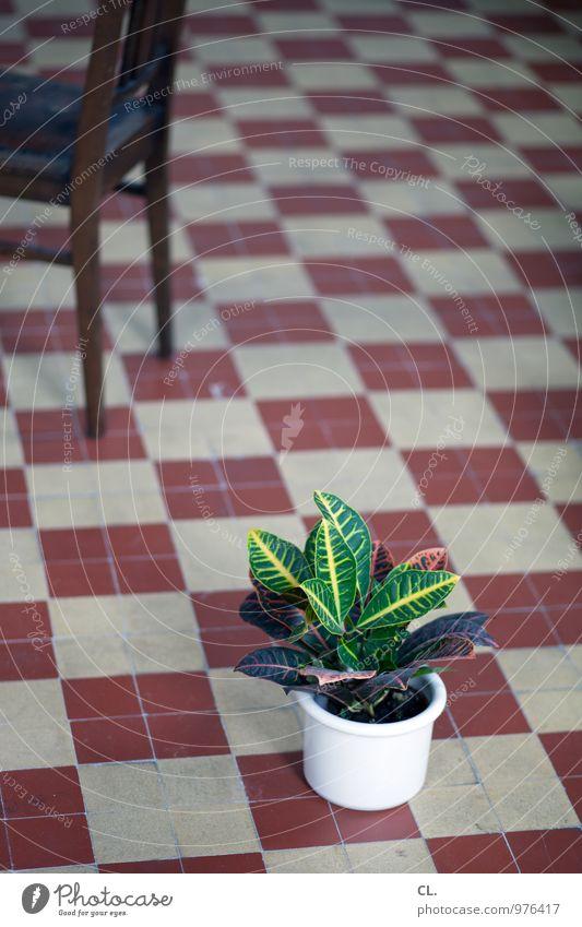 pflanze Pflanze Innenarchitektur Wohnung Raum Häusliches Leben Dekoration & Verzierung Boden Stuhl Umzug (Wohnungswechsel) Renovieren Blumentopf Grünpflanze