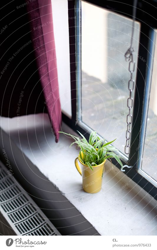 am fenster Häusliches Leben Wohnung Dekoration & Verzierung Raum Pflanze Mauer Wand Fenster Heizung Heizkörper Blumenvase Becher Fensterbrett Kette Vorhang