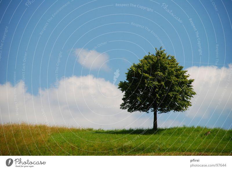 bis über die Wolken... Baum Einsamkeit grün Wiese Horizont Grenze Am Rand weiß Blatt Feld schön Sommer Frühling Beleuchtung Natur Himmel blau Baumstamm Wetter