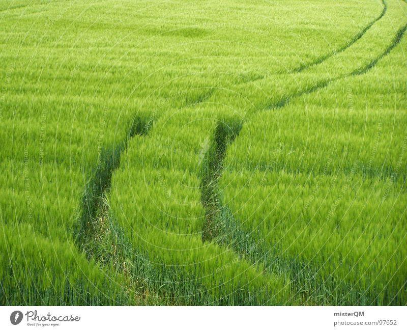 Feldspuren Natur grün Ausweg Wege & Pfade verloren Spaziergang Fußweg Getreide Aussaat wohin Spuren Windspiel Streifen Muster Reifenspuren Fahrbahn Leben