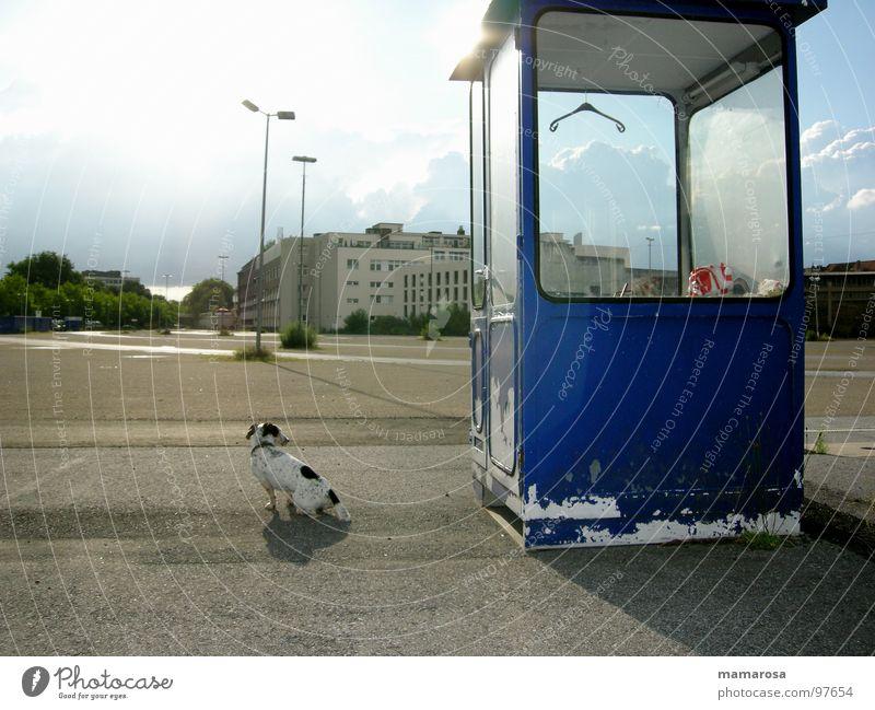Flecki auf verlorenem Posten Parkplatz Einsamkeit Kleiderbügel Messe Welpe Treue Freundschaft lustig Hund Wachsamkeit blau frei Feierabend Langeweile verfallen