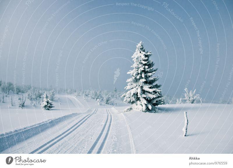 Winter, verzaubert Natur Landschaft schlechtes Wetter Unwetter Schnee Tanne Hügel blau Gefühle Stimmung Weisheit geheimnisvoll Gelassenheit Zufriedenheit