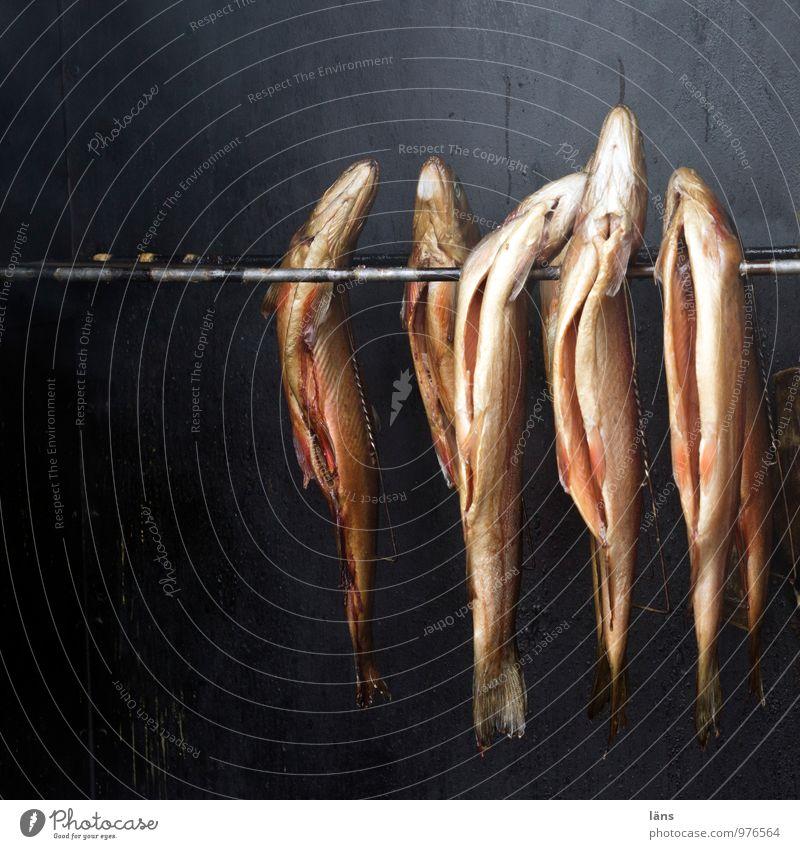 Freitag ist Fischtag Lebensmittel Ernährung geräuchert Fischereiwirtschaft Tiergruppe hängen Duft Zusammensein Tod Vergänglichkeit Wandel & Veränderung