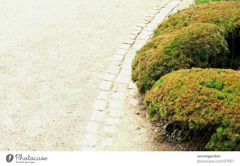 runde sache Sträucher grün Wasserrinne Kies weiß abbiegen Pflanze Park Wegrand Sommer kürzen Bonsai Kultur Kunst Gartenkunst Botanik Natur Erholung Spaziergang