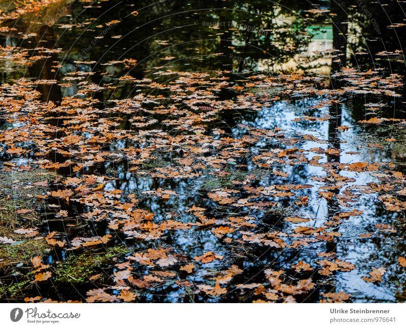 Feuchtigkeit | Karls See Tourismus Ausflug Städtereise Umwelt Natur Landschaft Pflanze Wasser Herbst Baum Blatt Garten Park Teich Radebeul fallen liegen