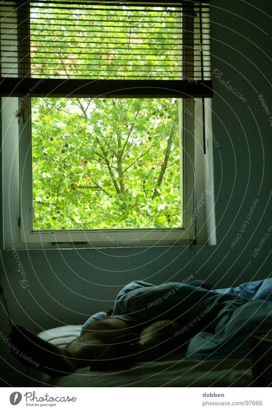 Lichtblick Bett verkatert schlafen Innenaufnahme grün Fenster Bewusstseinsstörung Bettwäsche zudecken bewegungslos Rollo Lichteinfall Alkoholisiert Wohnung Club
