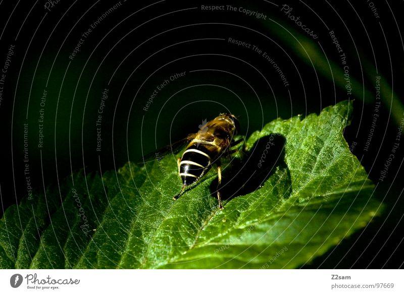 sonnen Natur grün Blatt Tier fliegen Beginn Flügel Insekt Biene aufwärts Wespen bereit Startrampe