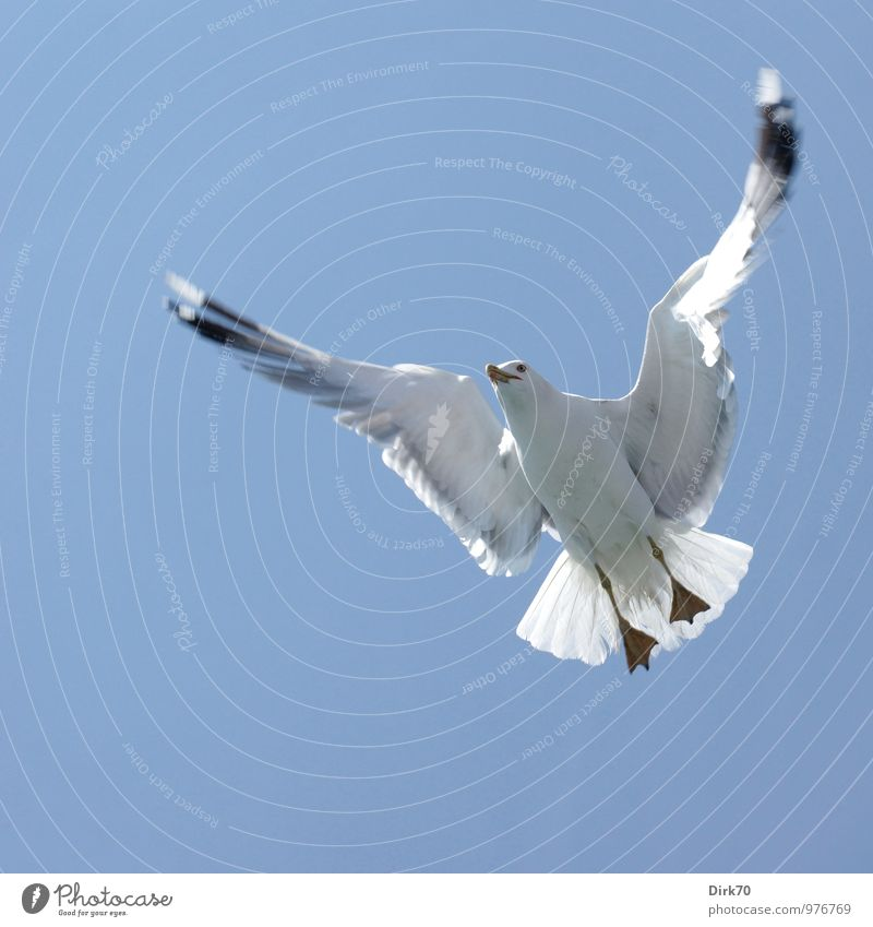 Komplexe Flugmanöver Natur blau weiß Meer Tier schwarz kalt Leben grau fliegen Vogel Wildtier Tourismus frei ästhetisch Ausflug