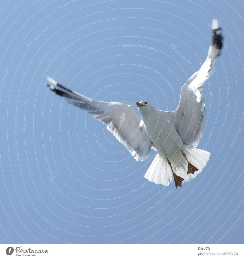 Komplexe Flugmanöver Tourismus Ausflug Kreuzfahrt Natur Tier Wolkenloser Himmel Schönes Wetter Meer Istanbul Schifffahrt Wildtier Vogel Flügel Möwe Lachmöwe