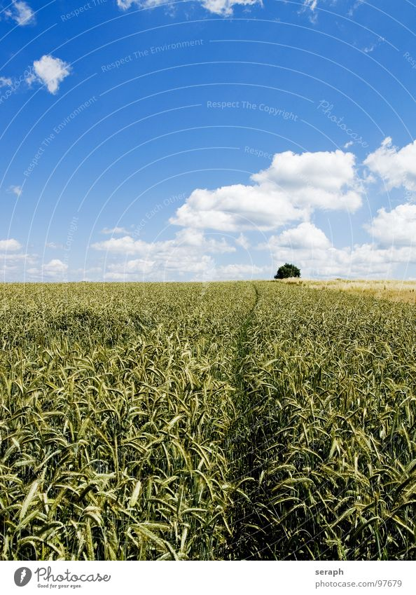 Getreidefeld Wiese Feld Roggen Weizen Gerste Horizont Umweltschutz Halm Ähren ökologisch Kornfeld ländlich Landwirtschaft Natur Landschaft Ackerbau Pflanze