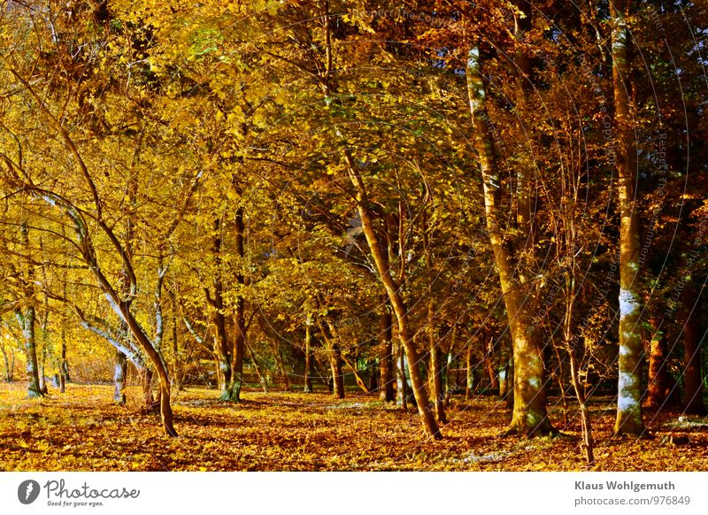 """""""Mein unerschöpflicher Park"""" ;-) Umwelt Natur Pflanze Herbst Baum Blatt Salow Dorf blau braun gelb gold grün schwarz Farbfoto Außenaufnahme Menschenleer Abend"""