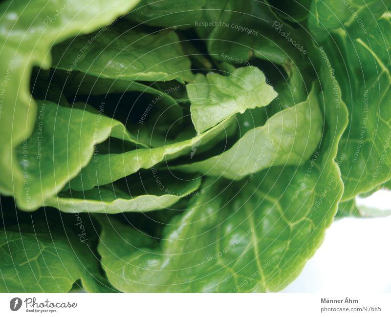 Grüner Gartensalat grün Sommer Ernährung Garten frisch Gastronomie Gemüse Salat Vegetarische Ernährung Dressing