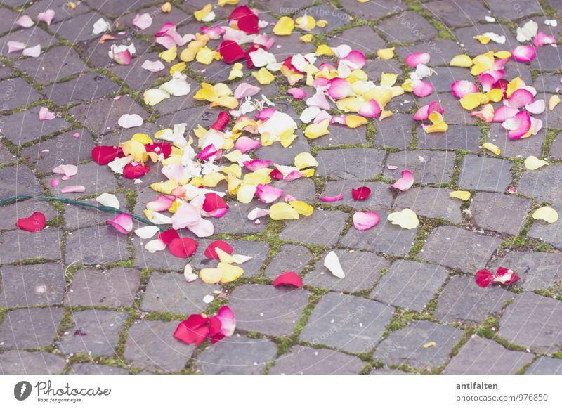 Hochzeits | !Trash! rot Blume Blatt Freude gelb Liebe Blüte Glück Feste & Feiern rosa Party Geburtstag Fröhlichkeit ästhetisch Lebensfreude Freundlichkeit
