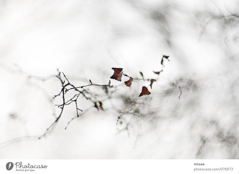 big in japan Winter schlechtes Wetter Einsamkeit Halloween Kunst Japan Theaterschauspiel Umwelt Natur Himmel (Jenseits) Baum Zweige u. Äste Birke Holz Bewegung