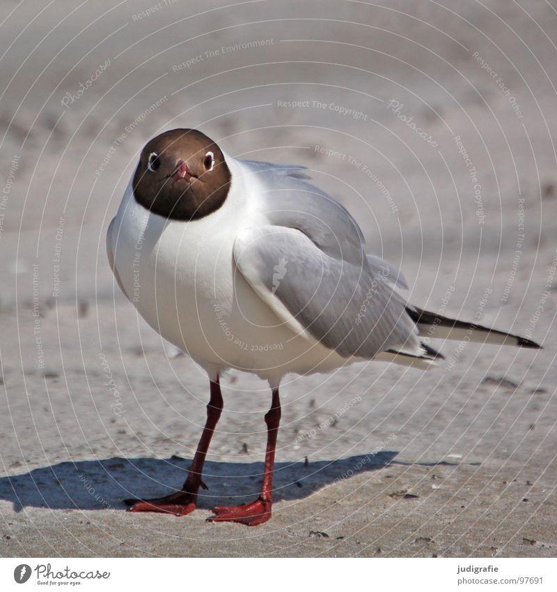 Lach, Möwe! Natur Meer Sommer Strand Ferien & Urlaub & Reisen Tier See Sand Beine Vogel Küste Umwelt fliegen bedrohlich Feder Flügel