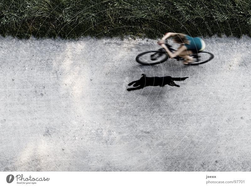 Absicht V Ausdauer fahren Fahrrad Gesundheit Frau geradeaus Geschwindigkeit Gras Grenze Hund Leichtigkeit Linientreue Am Rand Erholung schwarz 100 Meter Lauf