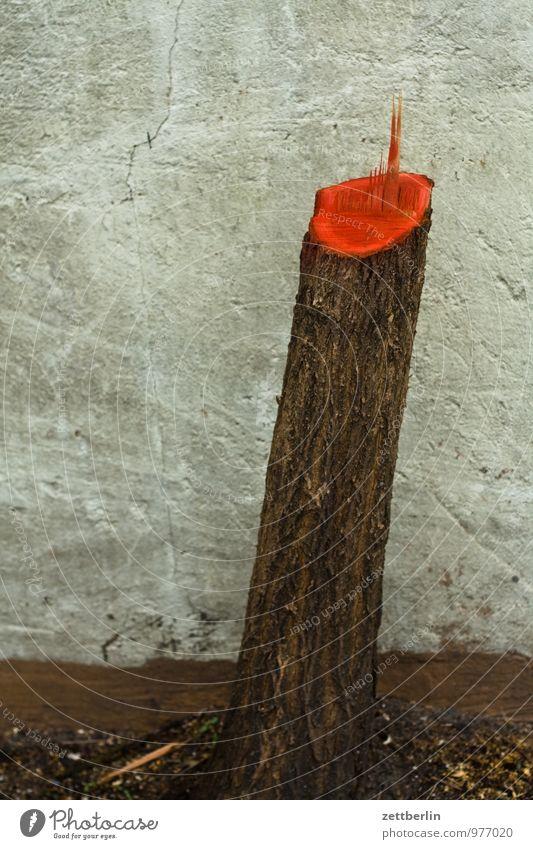 Baum Baum fällen Holzfäller Baumstamm gefallen Schnittwunde rot Farbe Farbstoff Späne Splitter Baumrinde Schilder & Markierungen Wunde Jahresringe Wald