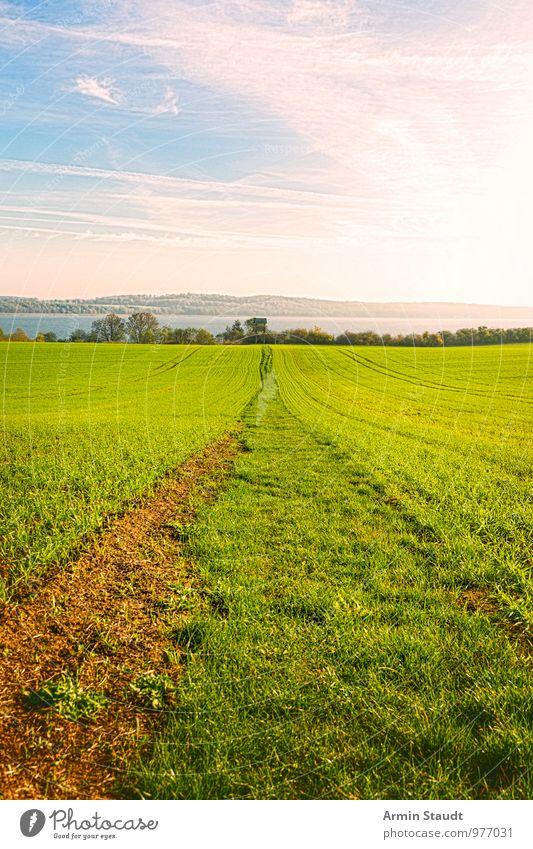 Feldweg zum See Himmel Natur schön grün Sommer Sonne Landschaft Ferne Umwelt Wiese Frühling natürlich Wege & Pfade Stimmung hell