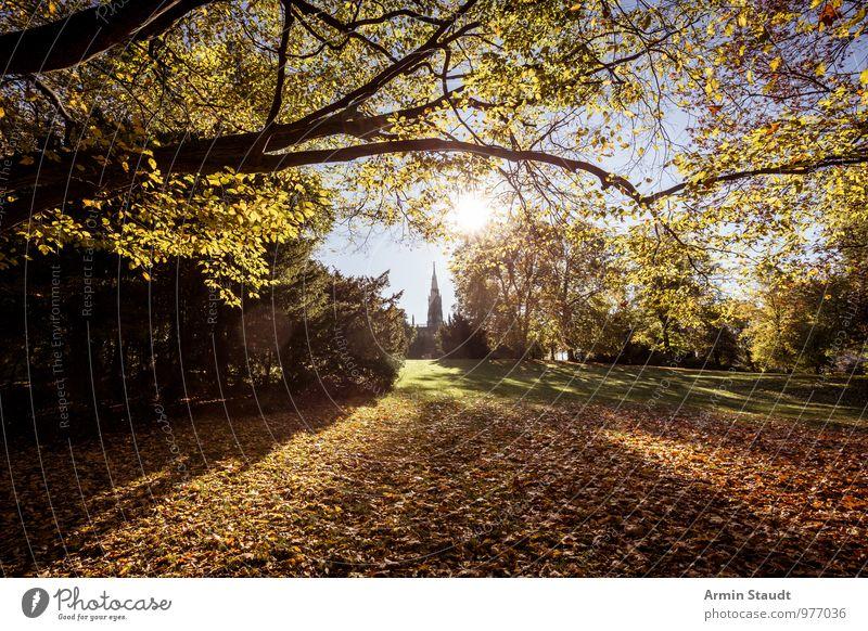 Victoriapark - Herbst Lifestyle harmonisch ruhig Natur Landschaft Himmel Wolkenloser Himmel Sonne Sonnenlicht Schönes Wetter Baum Herbstlaub Wiese Ast Park