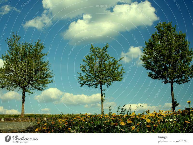 Die drei Muskebäume Baum Baumreihe Wolken aufgereiht 3 Frühling Reifezeit austreiben Wachstum Wiese Blume Löwenzahn Himmel Reihe Ast Linie Natur Trieb Pflanze