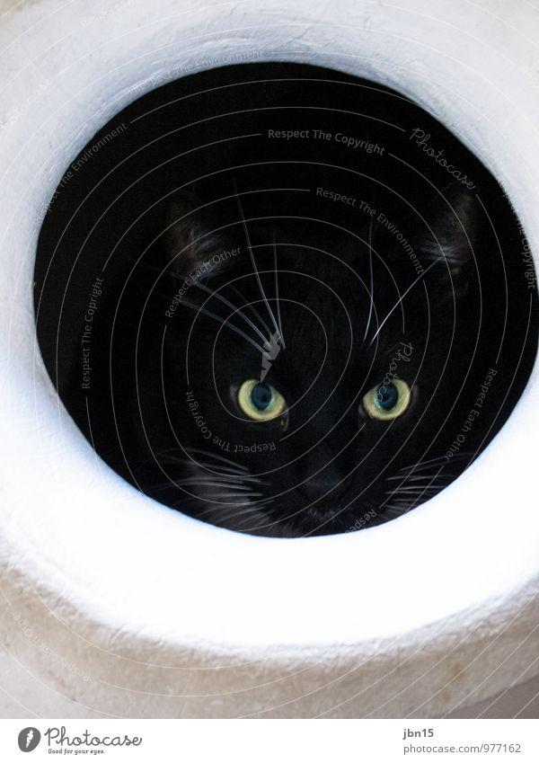 Cat Katze weiß Erholung Tier schwarz Gefühle lustig Stimmung hell authentisch warten beobachten Freundlichkeit entdecken nah trendy